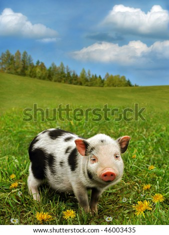 Cute piglet on spring meadow - stock photo