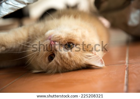 Cute playful cat. - stock photo