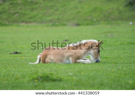 Cute playful foal resting in summer pasture - stock photo