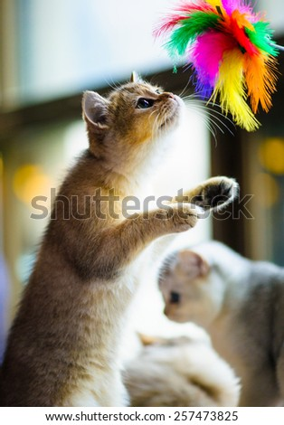 Cute playful kitten - stock photo