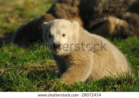 cute polar bear cub on the grass - stock photo