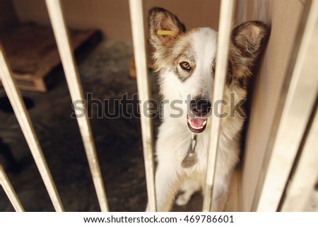 cute positive dog looking in  shelter cage, happy and sad emotional moment, adopt me concept, space for text