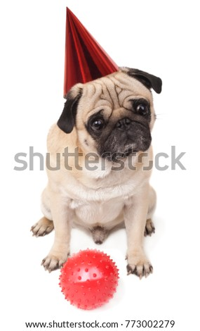 cute pug in festive cap and a red ball close-up on white background