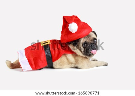 Cute pug puppy wearing a santa claus costume, Isolated over white
