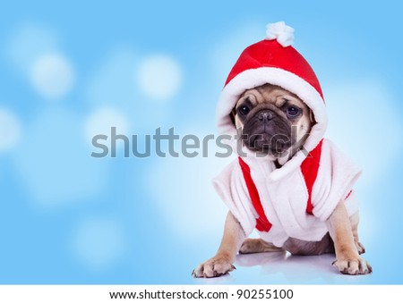 cute pug puppy wearing a santa claus costume on a nice background - stock photo