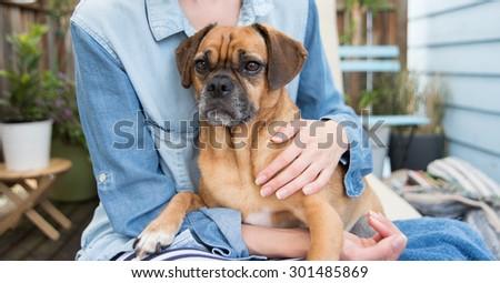 Cute Puggle Sitting on Woman's Lap outside - stock photo