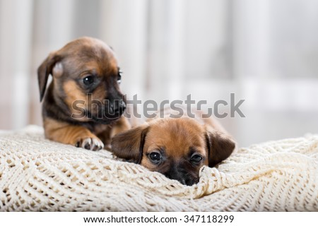 Cute puppies - stock photo