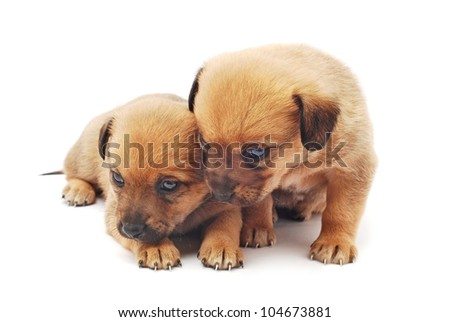 cute puppies on white background
