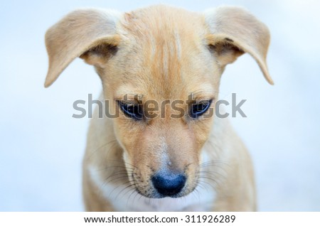 Cute puppies two month old - stock photo