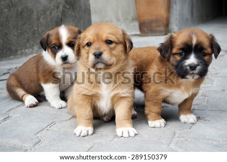 cute puppy. - stock photo