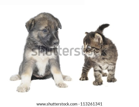Cute puppy and  cat on a white background - stock photo