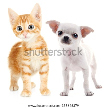 Cute puppy and kitten isolated on white - stock photo