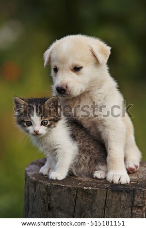 cute puppy and kitten on the grass outdoor;