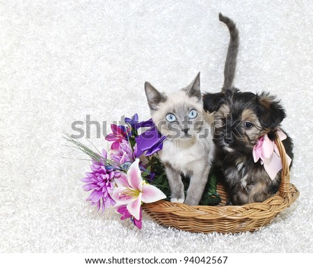 Cute puppy and kitten sitting in a basket together with spring flowers on a white background. - stock photo