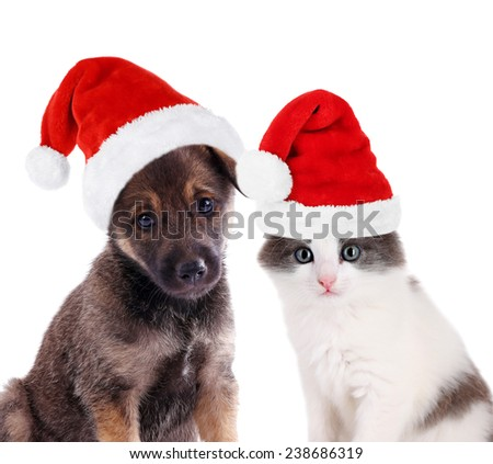Cute puppy and little kitten isolated on white - stock photo