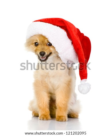 cute puppy dog in red christmas Santa hat, isolated on white background - stock photo