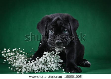 cute puppy dog in the decorations - stock photo