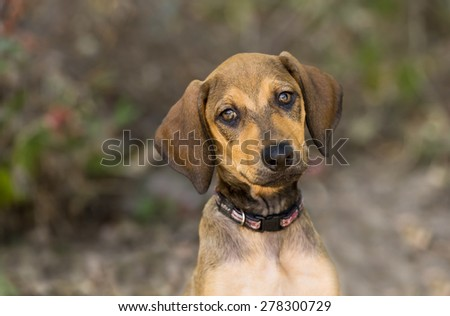 Cute Puppy Dog is outside looking curious - stock photo