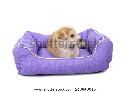 Cute puppy dog resting in its bed against a white background - stock photo