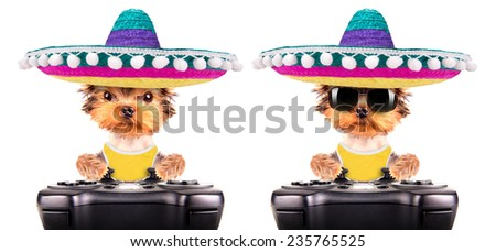 cute puppy dog wearing a mexican hat play on game pad isolated - stock photo