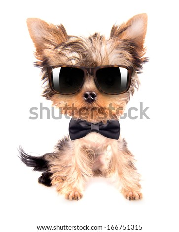 cute puppy dog wearing a neck bow and shades, sitting on white background - stock photo