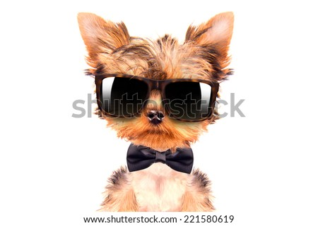 cute puppy dog wearing a neck bow and shades, sitting on white background