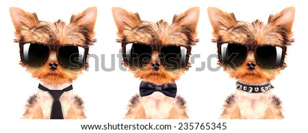 cute puppy dog wearing a shades on white background - stock photo