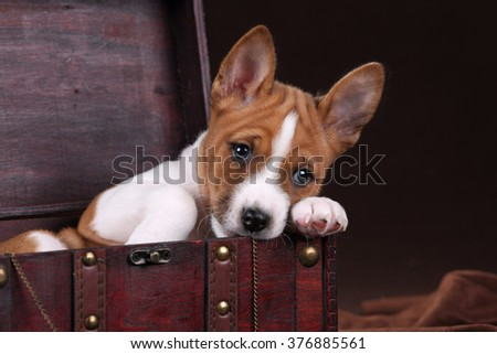 Cute puppy dogs sitting in a chest