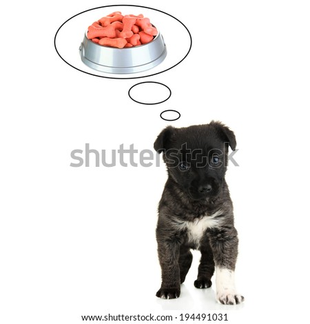 Cute puppy dreaming of dry foods, isolated on white - stock photo