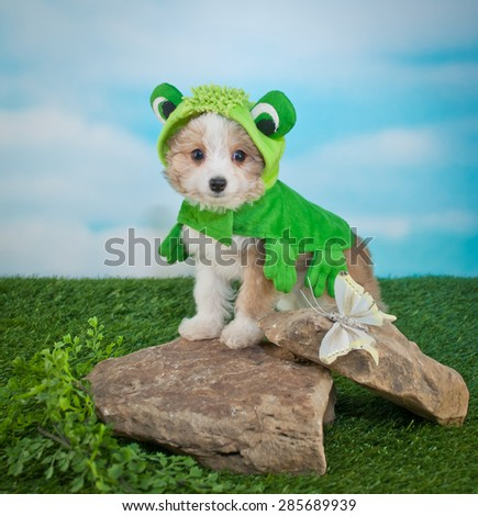 Cute Puppy dressed up in a frog outfit standing on rocks outside next to a butterfly. - stock photo