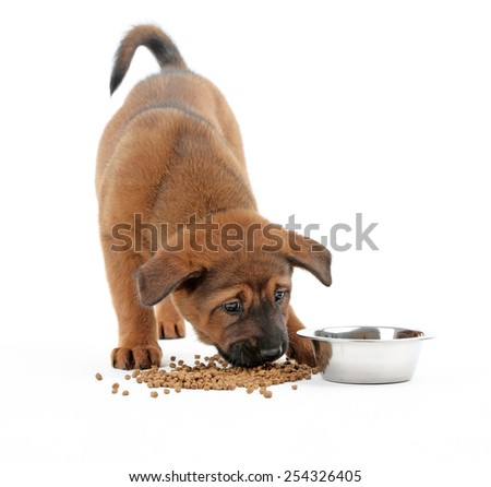 Cute puppy eating isolated on white - stock photo