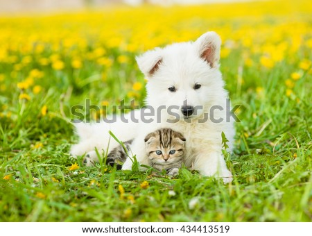 Cute puppy embracing tabby kitten on a dandelion field