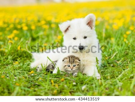 Cute puppy embracing tabby kitten on a dandelion field - stock photo
