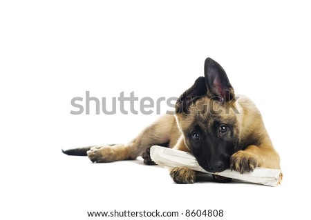 Cute puppy enjoying its morning paper - stock photo