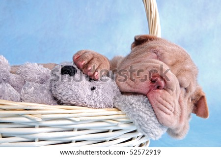 Cute puppy having a comfy sleep in a basket - stock photo