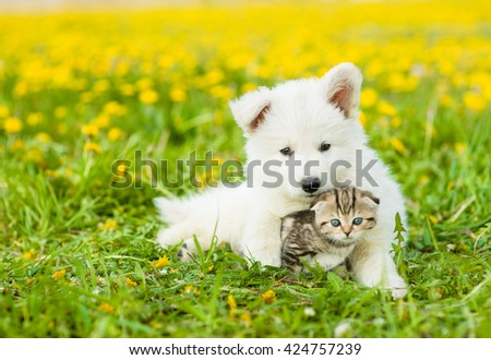 Cute puppy hugging a kitten on a dandelion field