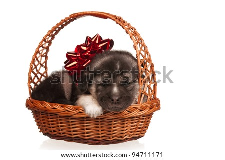 Cute puppy in a wicker basket on a white background