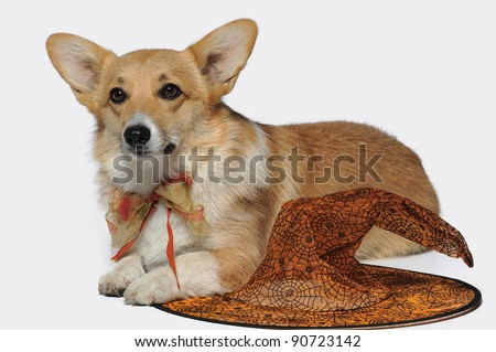 Cute puppy in an orange bow laying next to halloween hat - stock photo