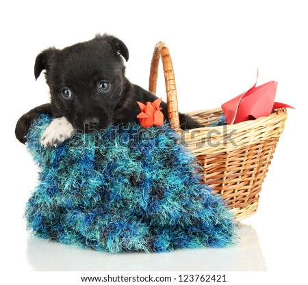 Cute puppy in basket isolated on white - stock photo