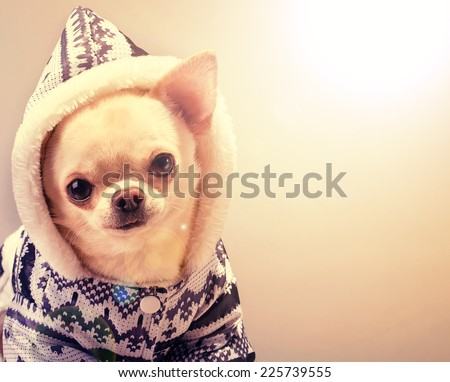 cute puppy in coat and hood looking at camera - stock photo