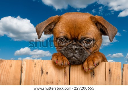 Cute puppy in the sky - stock photo