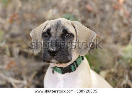 Cute puppy is an adorable dog outdoors looking at you with his funny face.  - stock photo