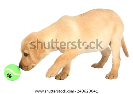 Cute puppy learning to play with it's green ball - stock photo