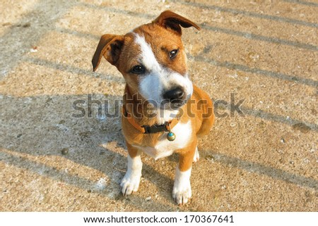 Cute puppy looking curious,Dog mixed breed - stock photo