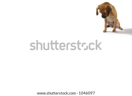 cute puppy looking down (with room for text) - stock photo