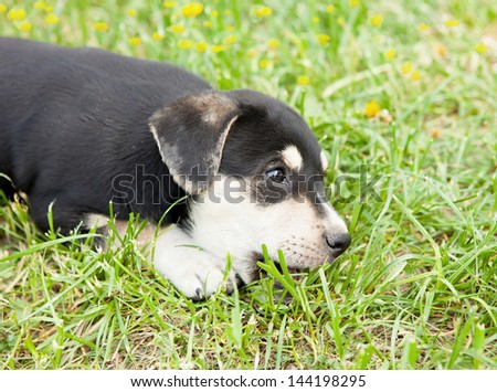 cute puppy lying in the grass outdoors