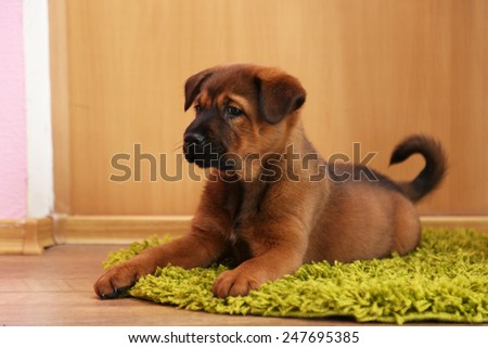 Cute puppy lying on carpet in room - stock photo