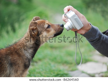 Cute puppy met the photographer and sniffing the camera - stock photo