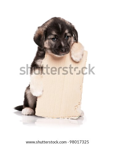Cute puppy of 1,5 months old with a cardboard on a white background - stock photo