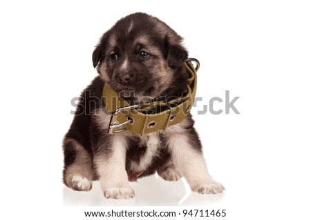 Cute puppy of 3 weeks old with big collar on a white background
